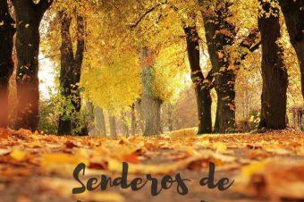 Senderos de hoja caída donde disfrutar del otoño en Almería y alrededores