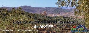 Olivos Centenario Alpujarra